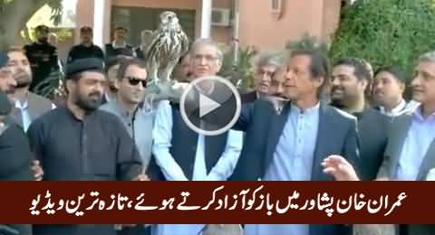 Imran Khan Setting Falcons Free with His Own Hands in Peshawar