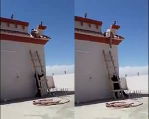 The Ladder Prank!! – Video Gone Viral - Watch Now