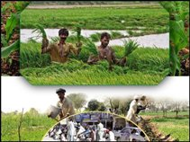 The profession of agriculture excluding Pakistanis